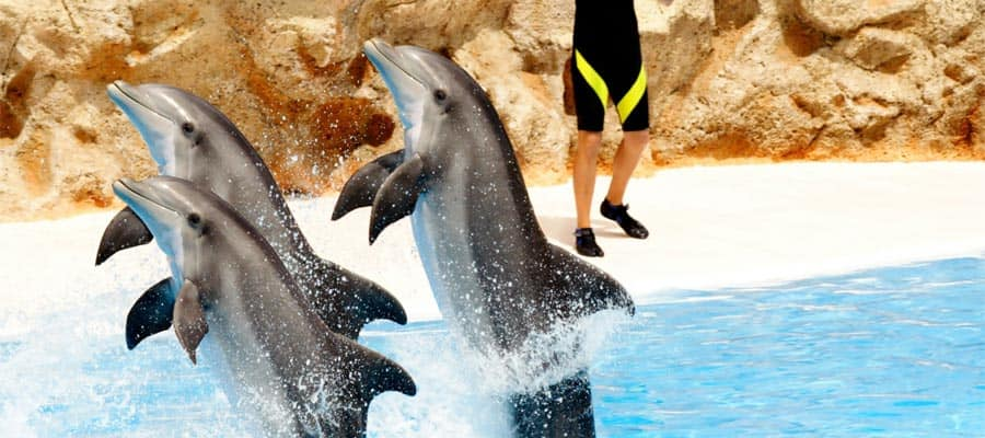 Be dazzled in a dolphin show