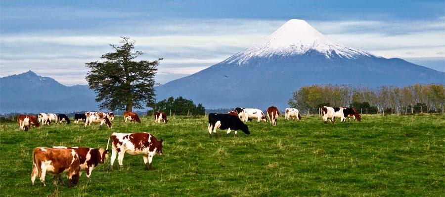 Cruise to Osorno Volcano