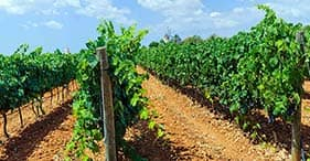 Local Wines & Panorama
