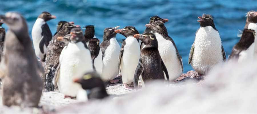 Pinguins amistosos em Puerto Madryn
