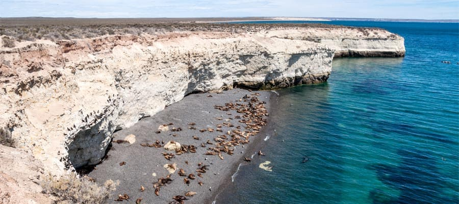 Colony of sea lions