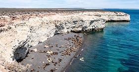 Dinossauros da Patagônia & reserva de Punta Loma