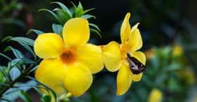 Tahiti's Natural Treasures