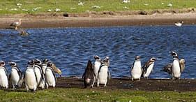 Expedição dos pinguins em North Pond