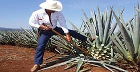 Ciudad, país y tequila