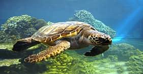 Avventura ecologica alle isole Marieta