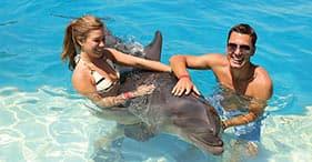 Incontro con delfini