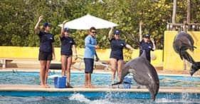 Addestratore di delfini per un giorno