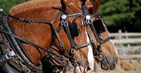Portland en carro tirado por caballos