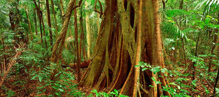 Lush rainforest on your Brisbane cruise