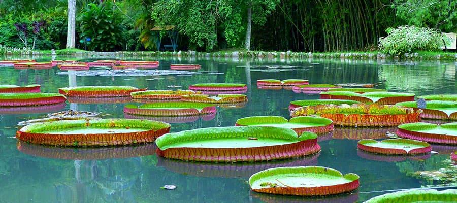Giardino botanico durante una crociera a Rio de Janeiro