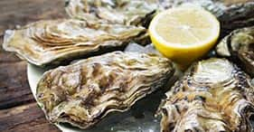 Oysters in Eden