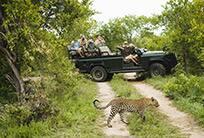 Leopard Mountain Safari