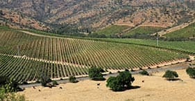 Wines, Horses & Santiago Overview with Transfer