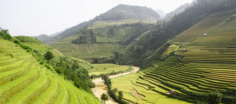 Terraced green fields on Phu My (Ho Chi Minh City) Cruises