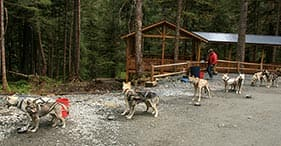 Musher's Camp & Sled Dog Discovery