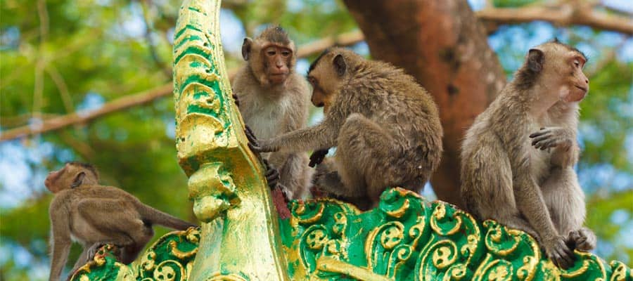 Monkeys at a buddhist temple on your Asia cruise