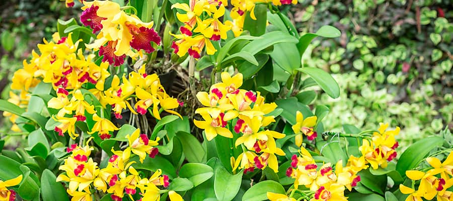 Stunning Orchid Flowers on your Singapore Cruises