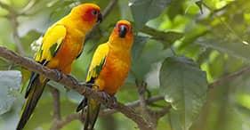 Parc aux oiseaux exotiques de Jurong