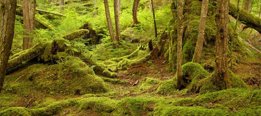 Bosque Nacional Tongass