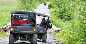 Safari em 4x4 pela natureza do Alasca