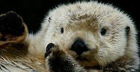 Lontras marinhas, aves de rapina & ursos, uau!