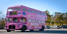 Tour hop-on/hop-off Big Pink Bus