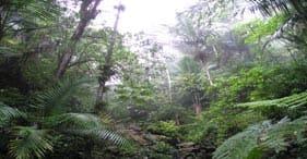 El Yunque Rainforest Drive