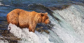 14-Day Alaska from Whittier (Combined Itinerary)