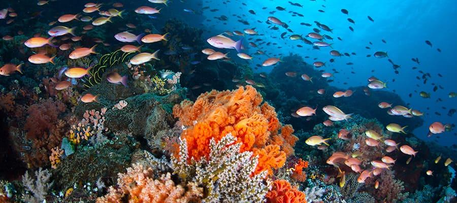 Peces coloridos en cruceros a Sánya