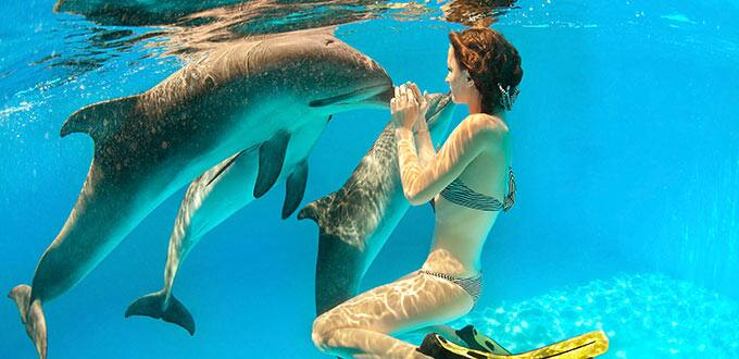 Take a dip and make a new friend on a dolphin swim excursion