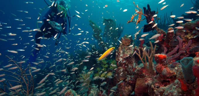 Coral reefs teem with sea life in St. Thomas