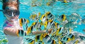 Norman Island Snorkel