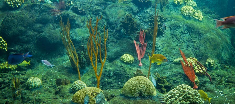 Colourful coral reef on your Tampa cruise