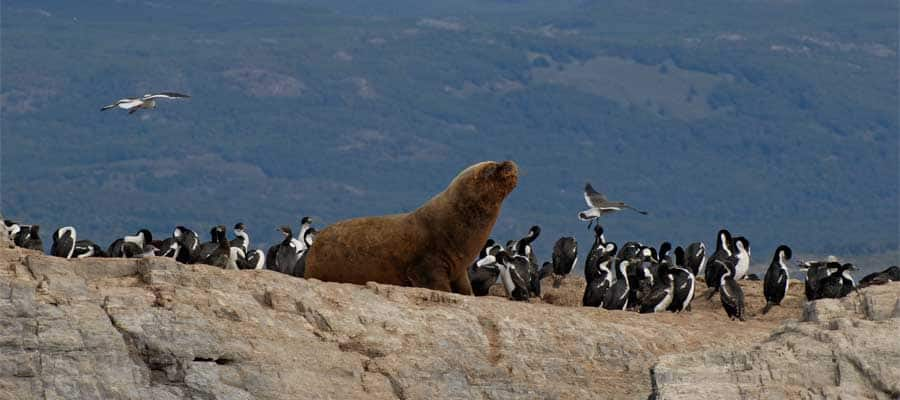 Sea lions in Tierra del Fuego