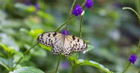 Butchart & Butterfly Gardens