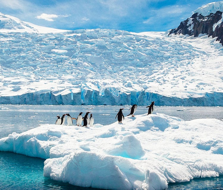 Cruises to Antarctica
