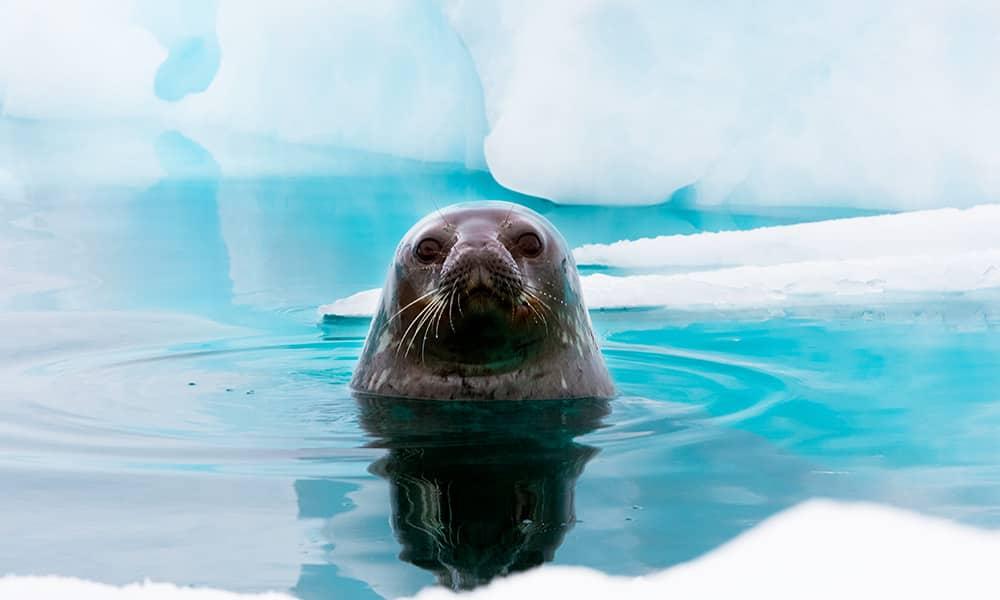 Fauna selvatica in Antartide