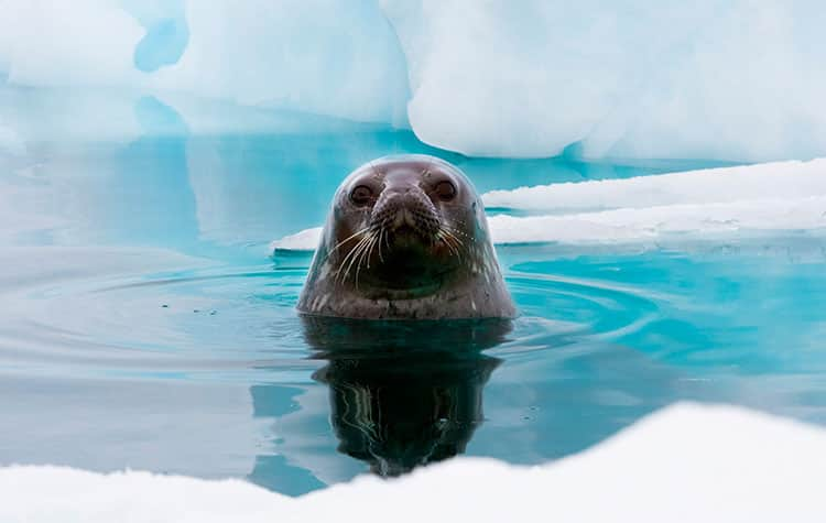 Come closer to Antarctica Wildlife on a cruise with Norwegian