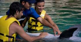 Dolphin Trainer Program All Inclusive