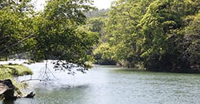 Naturausflug zum Monkey River