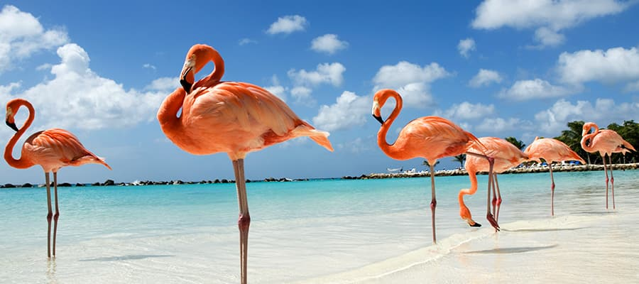 Cruises to Aruba