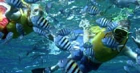 Reef & Wreck Snorkel