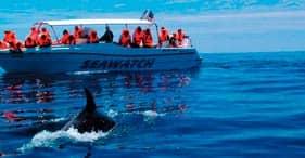 Dolphin Safari