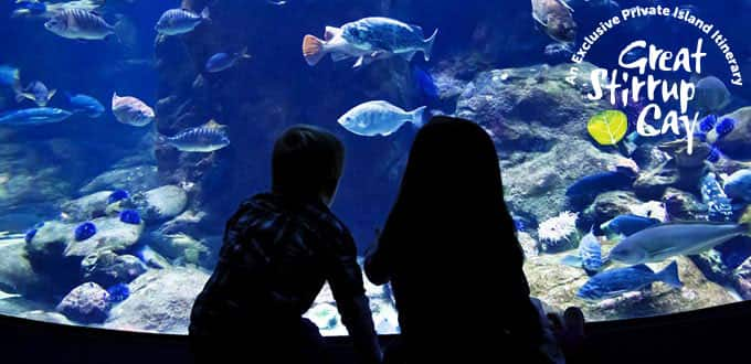 Experience childlike wonder at Nassau's Atlantis Aquarium.