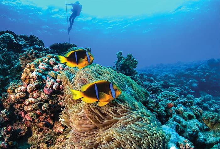 Experience French Polynesia Taihiti Underwater