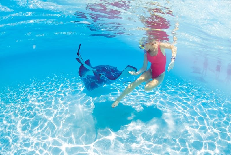 Swim with Stingrays in Grand Cayman