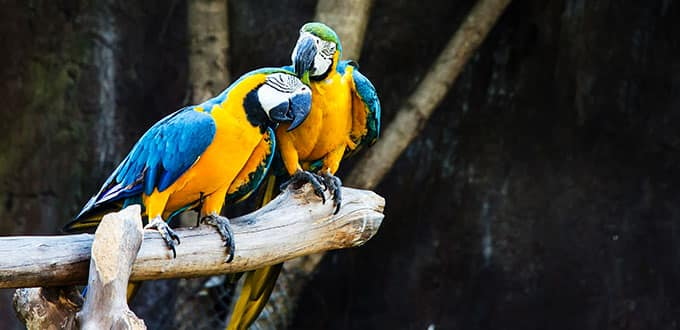 The colorful macaws of Panama Canal bring cheer