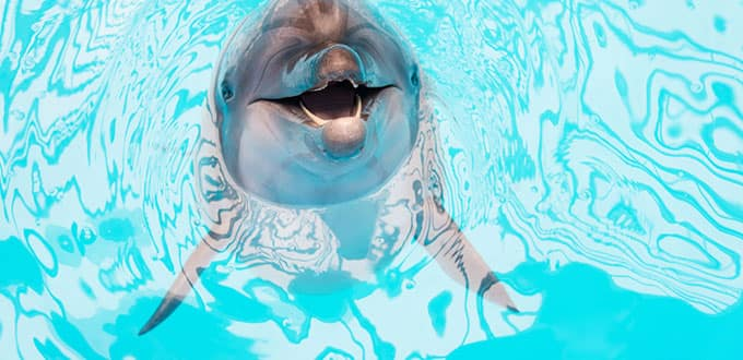 A lively dolphin swim will leave you smiling ear to ear