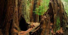 Muir Woods & Sausalito